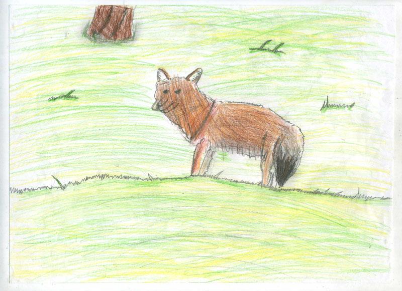 Красный волк и описание для детей 65